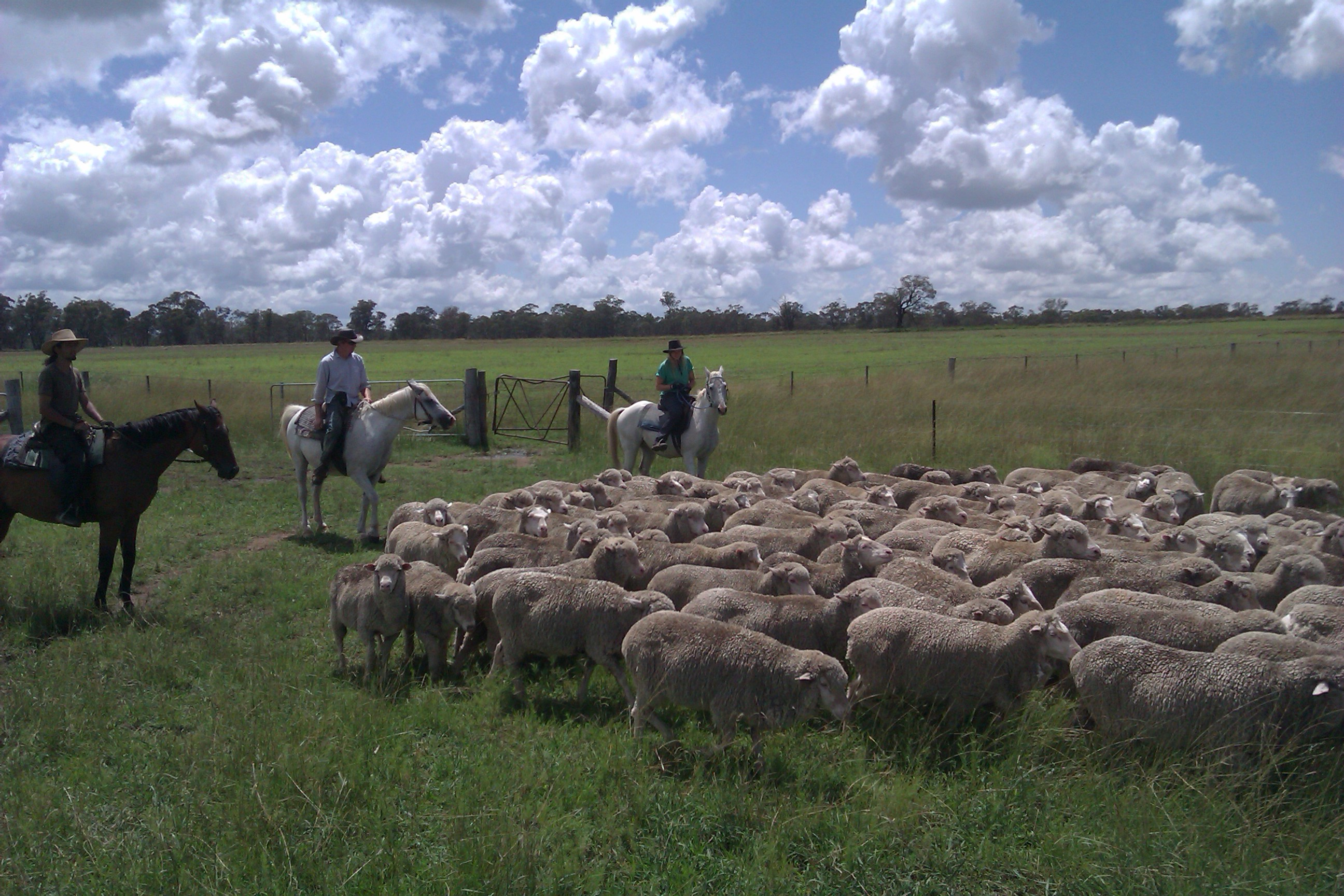 Coonabarabran Australia  City pictures : Coonabarabran, Australia: Outbackpackers and The Art of Farming ...